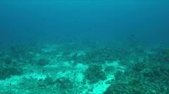 Coral reef with a Whitetipr Reef Shark and a Hawksbill Turtle. 4k Stock Footage