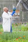 Mature scientist looking at liquid in volumetric flask in greenhouse - stock photo