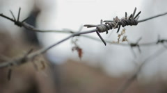 Closeup of sharp barbed wire, defocused man writing in notepad, rack focus Stock Footage