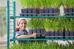 Young sales assistant arranging shelves of plants in garden centre Stock Photos
