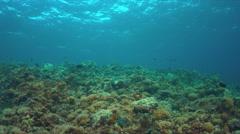 Whitetip reef shark 4k - stock footage