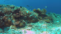 Moray eel on a colorful coral reef Stock Footage