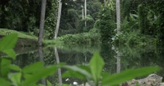 Tropical forest with lake in Cuba Stock Footage