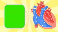 Heart - Vector Animation - Human Body - Sunburst - yellow Stock Footage