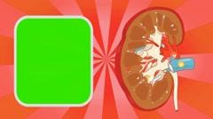 Kidney - Vector Animation - Human Body - Sunburst - red Stock Footage
