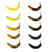 Spotless banana in a process of decompose - stock photo
