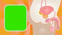 Penis - Vector Animation - Human Body - Sunburst - orange 01 Stock Footage