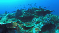 Nurse shark on a coral reef. 4k - stock footage