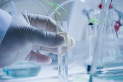 Scientist holding test tube with seedling Stock Photos