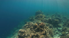 Hard and soft corals. 4k - stock footage