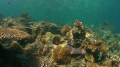 Coral reef with a Octopus. 4k Stock Footage