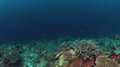 Whitetip reef sharks on a coral reef with plenty fish. 4k Stock Footage