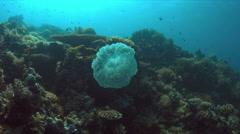 Jellyfish Stock Footage