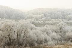 Trees covered with hoarfrost in a fog - stock photo