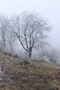 Trees covered with hoarfrost in a fog Stock Photos