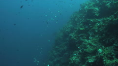 Coral reef with a reef shark and plenty fish 4k Stock Footage