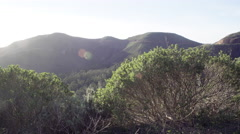 Bushes and rolling hills in the Headlands north of San Fancisco Stock Footage