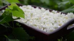 jasmine petals - stock footage