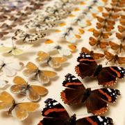 Collection of butterflies Kuvituskuvat