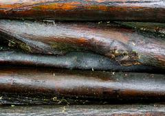 Few wet wood logs stacked on a pile - stock photo