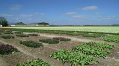 Bulb cultivation in Dutch polder. Small square trial fields in front Stock Footage