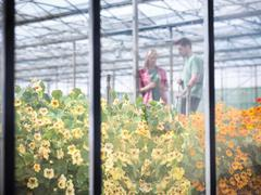 Farm workers in greenhouse abundant with blooming edible flowers - stock photo
