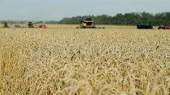 Harvesting of cereals: wheat, barley, rye. Stock Footage