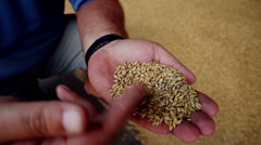 Harvesting of cereals: wheat, barley, rye. - stock footage