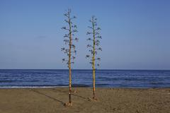 Two trees on beach, Cabo de Gata-N'jar Natural Park, Andalusia, Spain - stock photo