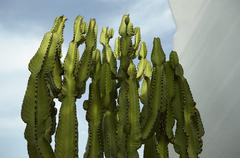 Cacti, Almeria, Andalusia, Spain - stock photo