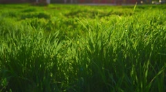 Green grass morning background Stock Footage