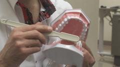 Dentist Brush Teeth Plastic Model Stock Footage