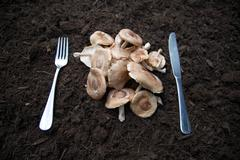Knife and fork with mushrooms laid on soil Stock Photos