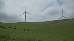 Cattle graze in a Californian wind farm Stock Footage