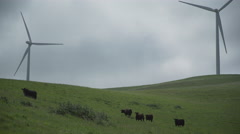 Cattle near two massive turbines in a Californian wind farm Stock Footage