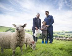 Mature farmer, adult son and grandson feeding sheep in field Stock Photos