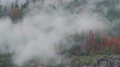 Time lapse of clouds drifting through the trees of Yosemite Stock Footage