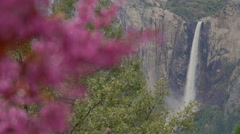 Pink tree in foreground of Yosemite falls Stock Footage