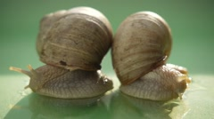 Two Snails Stock Footage