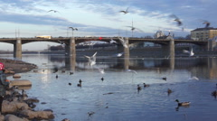 Seagulls and ducks on a background of Novovolzhsky bridge in Tver, Russia Stock Footage