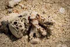 Coral on beach Moorea French Polynesia - stock photo