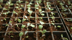 Flower seedlings in pots Stock Footage