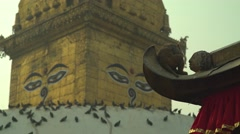 Nepal 1 Year After the Earthquake. Monkey Scratching at Swayambhu 4K Stock Footage