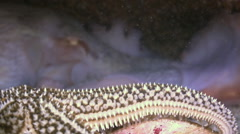 Octopus hiding in its hole under a rock at bottom. Stock Footage