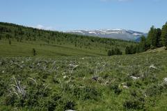 Altai region Russia mountain landscapes Stock Photos