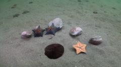 Starfish prey on a sandy bottom on the shells. Stock Footage