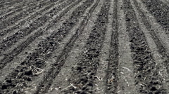 Sowing of sugar beet Stock Footage