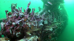Red sea sponges in the wreckage of a shipwreck. Stock Footage