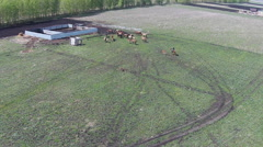 Herd of horses running in corral - stock footage