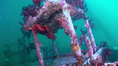 Red sea sponges in the wreckage of a shipwreck. - stock footage